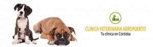 cropped-cropped-inicio-veterinaria.jpg