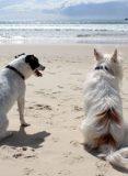 perros vacaciones